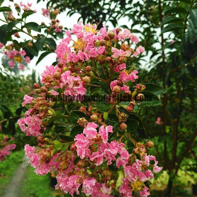 Jasa Pembuatan dan perawatan taman Bandung Jakarta Bunga hias 7