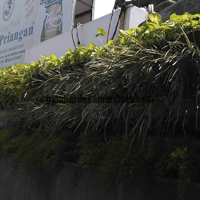 Jasa Pembuatan dan perawatan taman Bandung Jakarta vertical garden