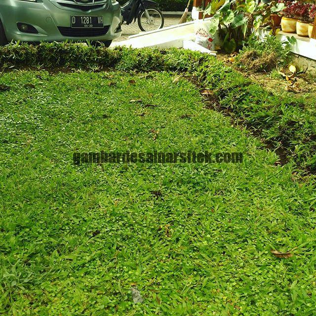 Jasa Pembuatan dan perawatan taman di Bandung Jakarta 1