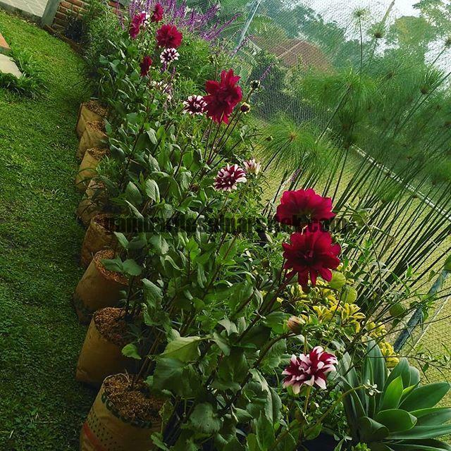 Jasa Pembuatan dan perawatan taman di Bandung Jakarta 3