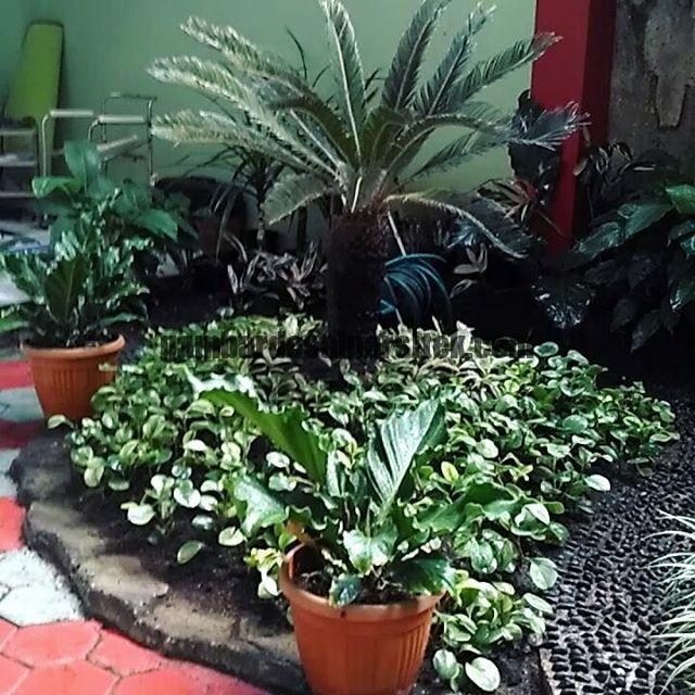 Jasa Pembuatan dan perawatan taman Bandung Jakarta Bunga hias 11