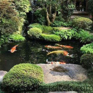 17 inspirasi kolam ikan depan rumah mau kolam minimalis atau 28 1