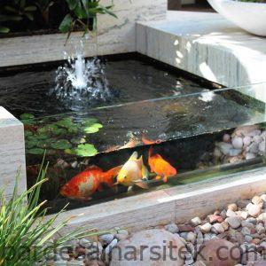 8 keuntungan rahasia punya kolam ikan koi di rumah 1